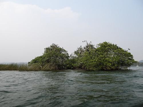 Rio Dulce: l'île aux oiseaux