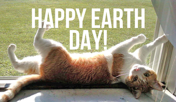 earth-day-cat-Sunkist-via-Barbara-Fedesco