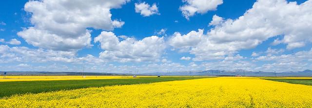 哈蓋爾草原