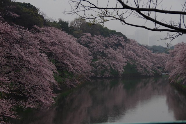2016/04/03千鳥ヶ淵-1