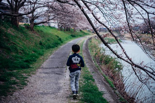 CherryBlossoms_06