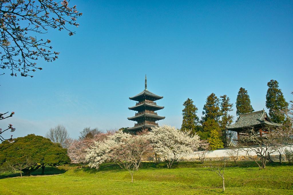 備中国分寺の桜