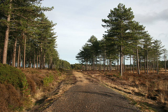 Rempstone Heath