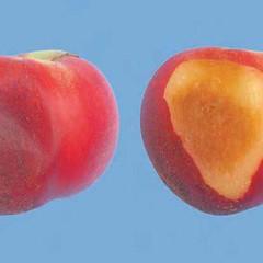 peaches-0046