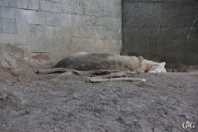 Besuch Zoo Rostock 29.12.201571
