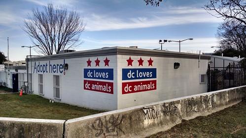 DC Animal Shelter