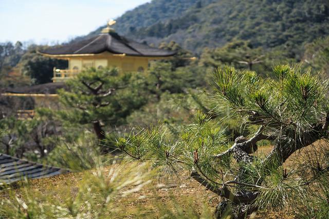 京都で金閣の写真を撮影するなら望遠レンズがあると便利