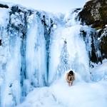 Twitter Tuesday - Frozen