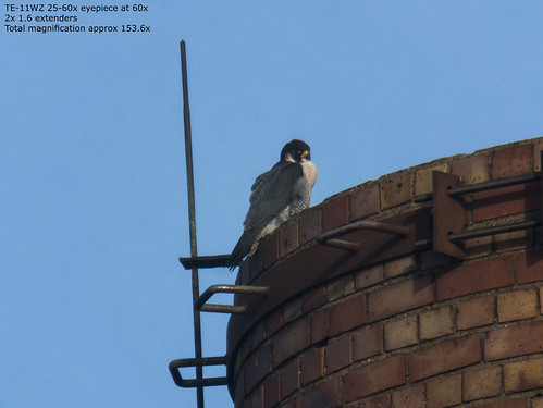 Peregrine at 153.6x mag