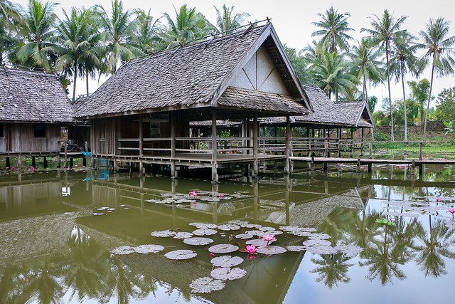 water lilies pond in the morning, Luang Prabang, Laos ルアンパバーン、朝の散歩で見つけた睡蓮の池