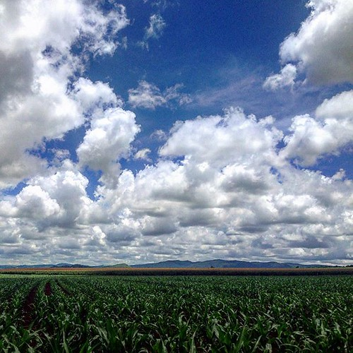 Saturday drive up the tablelands. #cairns...
