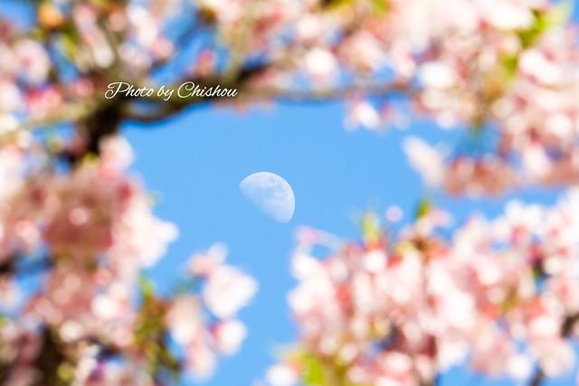 春の宵 〜 an evening in spring