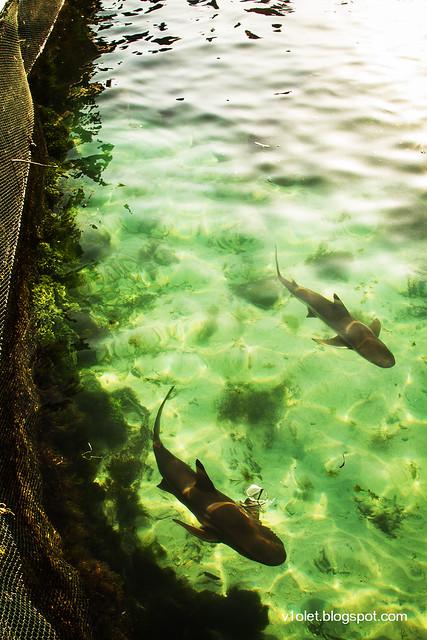 Nusa Karamba Ikan2-2271rw