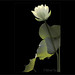 White Lotus Flower and backlit leaf on black background by Bahman Farzad