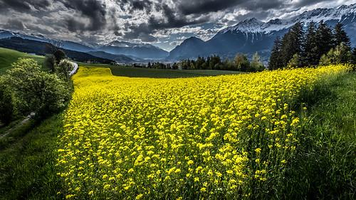 austria tirol österreich outdoor gelb raps 2016 wolkenstimmung at ampass marke59