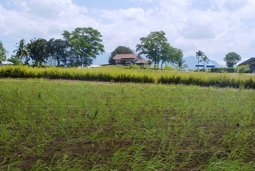 P16-Negros-Bacolod-San Carlos-route (4)