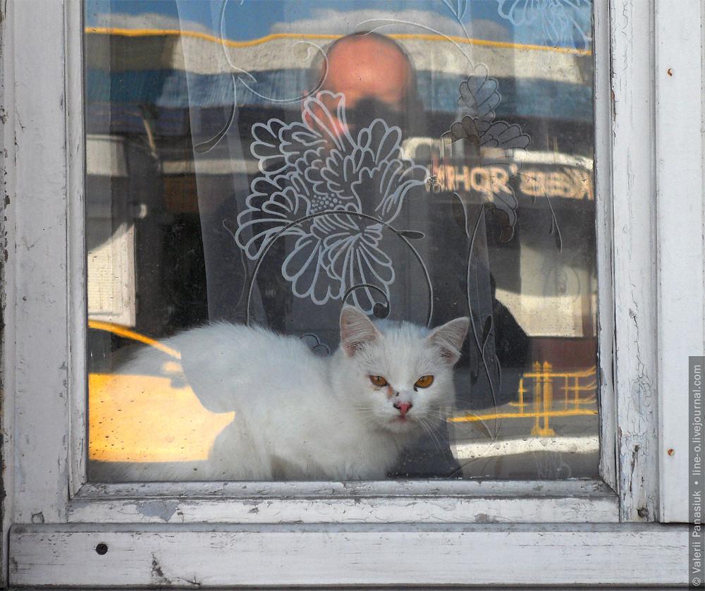 20160421_lutsk_cat_001