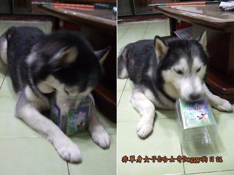 哈士奇Doggy愛狗零食15