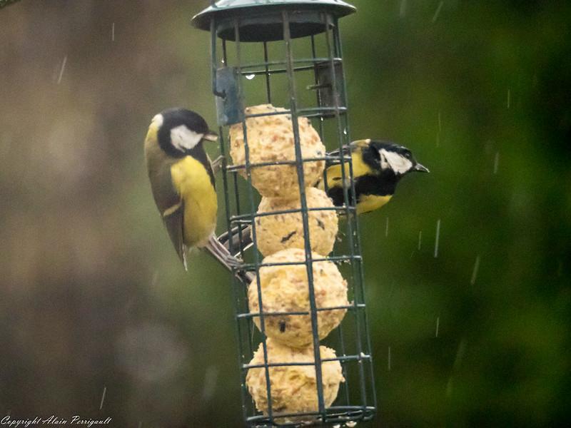 Déjeuner sous la pluie 23854117350_7979cdf45a_c