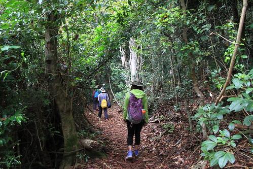 澳洲昆士蘭-Lamington NP the Woonoongora section-步道景觀-20141121-賴鵬智攝
