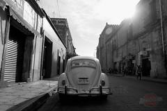 Bugging Oaxaca.
