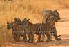 Maya & Cubs