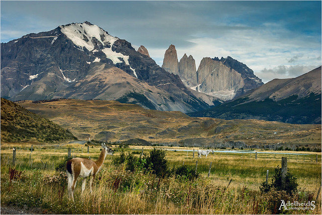 Torres with guanaco