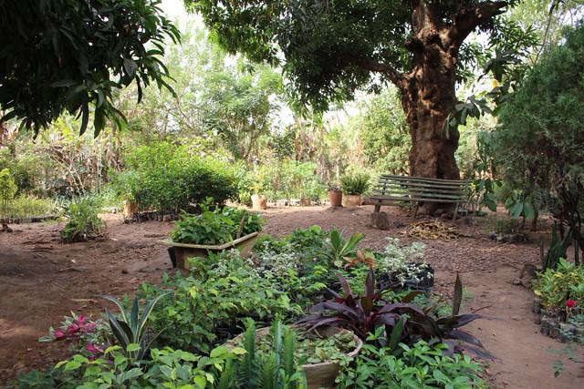 Ho Botanical Garden - the bench