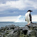 Happy Penguin Awareness Day! by Christopher.Michel