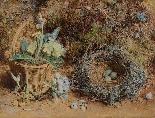 卵のあるツグミの巣とプリムラの館