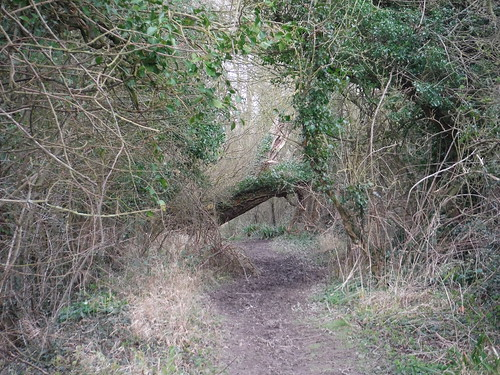 Path near Clavering Farm (II)
