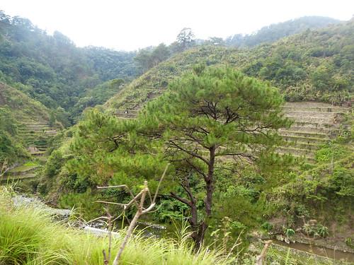 P16-Luzon-Bontoc-Banaue-route(12)