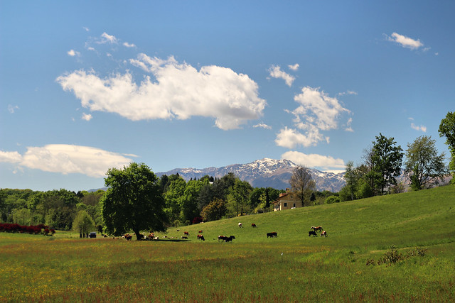 Le déjeuner sur l'herbe | #Biellese #Valdengo #Piemonte #Biella #Alps #bucolic