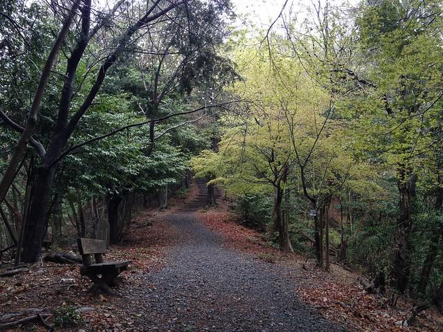 城台山 文学の里 登山道