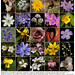Spring Wildflowers of the Indiana Dunes Poster by Pete Grube