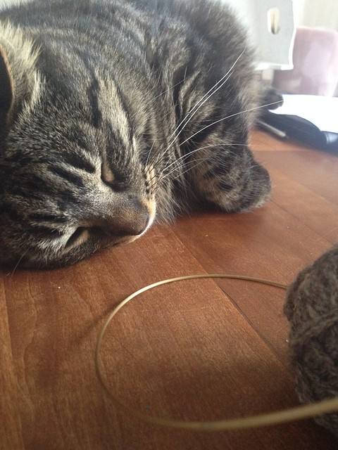 cat help with knitting