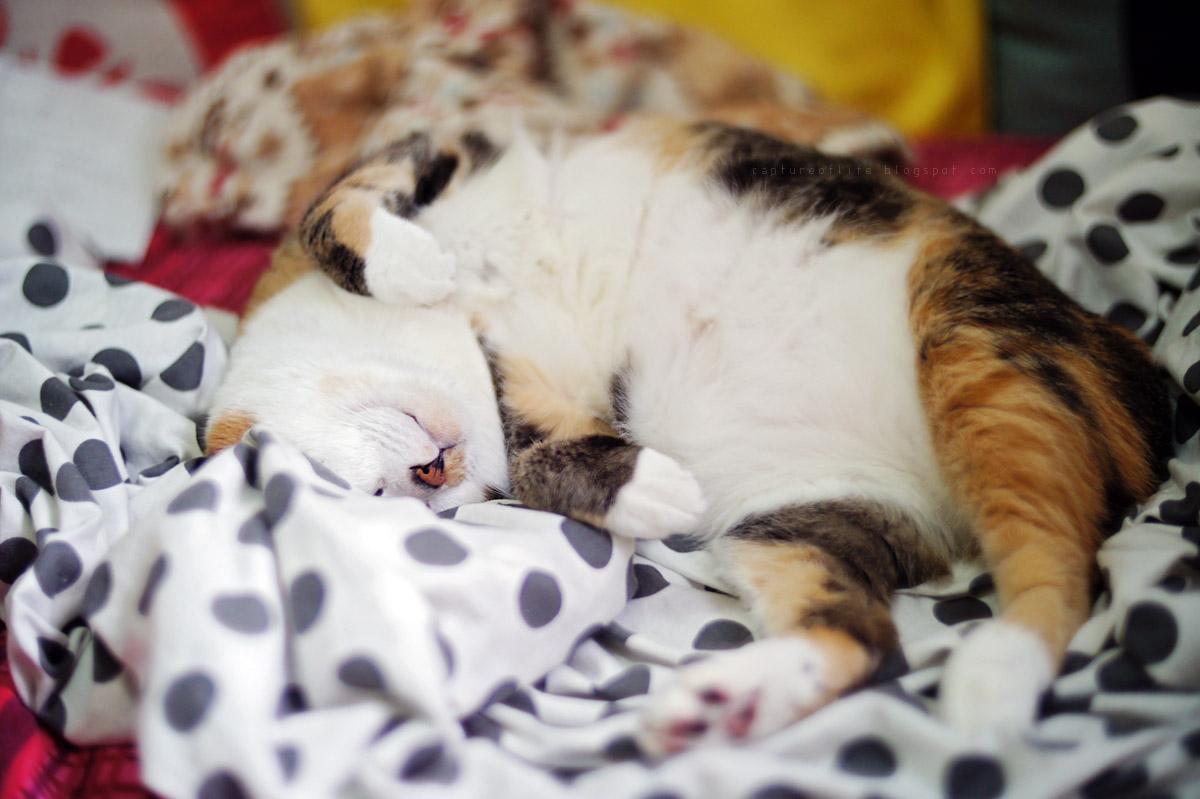 lazy life of E Meow