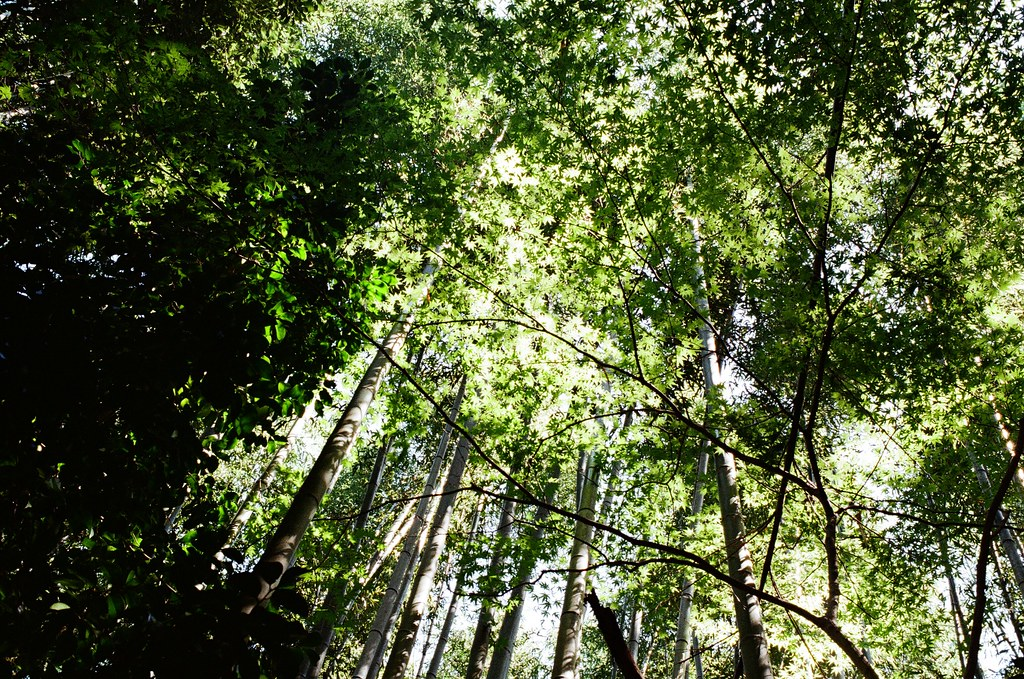 野宮神社 嵐山 Kyoto Japan / Kodak ColorPlus / Nikon FM2 2015/09/28 好像搭了快一個小時的公車到京都嵐山,公車有繞了一下路線,還好在啟程站上車,所以有座位坐。  看地圖上是寫要從野宮神社進入,在持續往後走就會到一大片的竹林,雖然走到野宮神社的路上就已經被竹林包圍了,但還是很期待很多人拍的竹林的場景會是如何!  Nikon FM2 Nikon AI AF Nikkor 35mm F/2D Kodak ColorPlus ISO200 0987-0030 Photo by Toomore