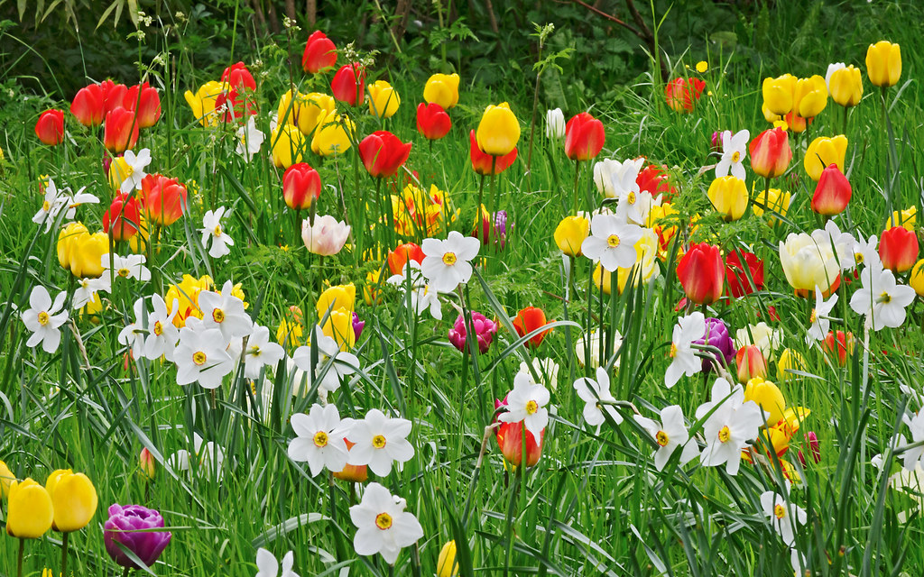 Happy Easter Spring Flowers At Ascott House Gardens Bu Flickr