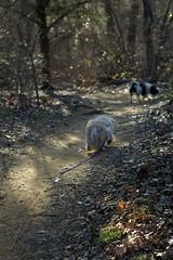trail doggies