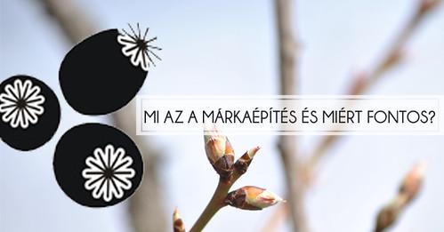 markaepites copy
