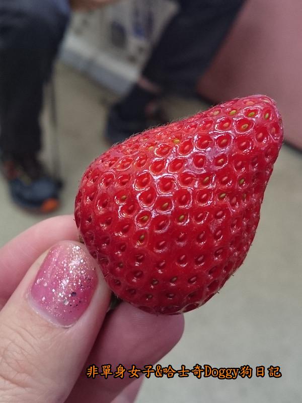 日本築地市場海膽蓋飯40