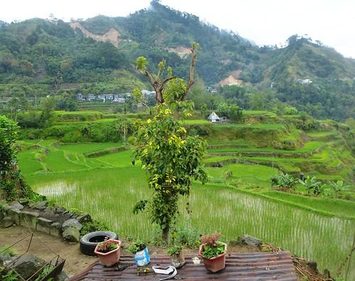 P16-Luzon-Mayoyao-Terrasses (11)