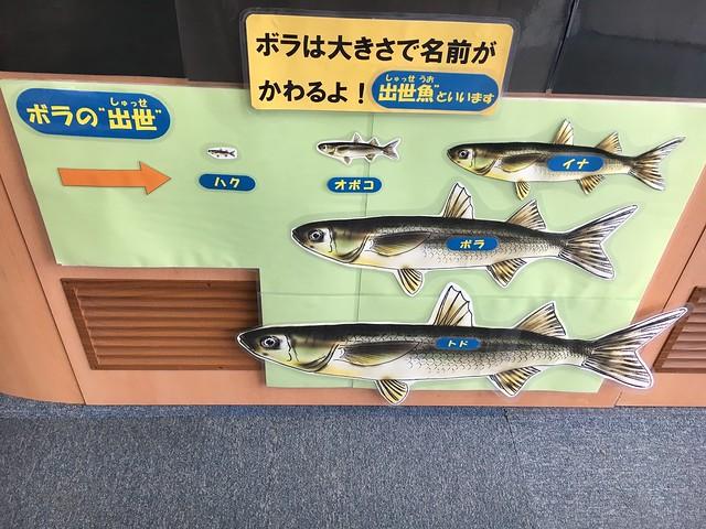 日産スタジアム近くの水族館
