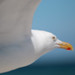 blurred gull by -j0n4s-