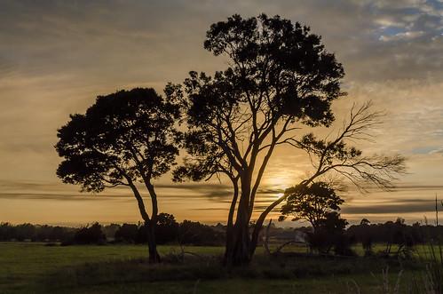 newzealand sky plants tree silhouette clouds sunrise landscape dawn nz wellington woodside florafauna
