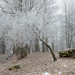 Frost and fog by - David Olsson -