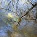 Down in the river by Lisbeth Pettersen