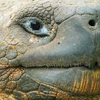 Tortoise Close-ups of wildlife in Galapagos islands - Ecuador