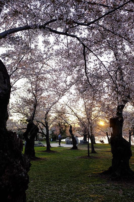 Blossom Grove
